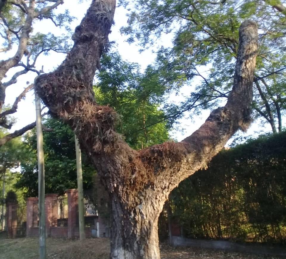 Censo forestal en Avenida San Martín