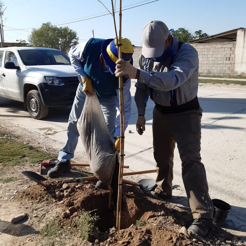 Avanzan los trabajos de forestación en la Avenida Ara San Juan