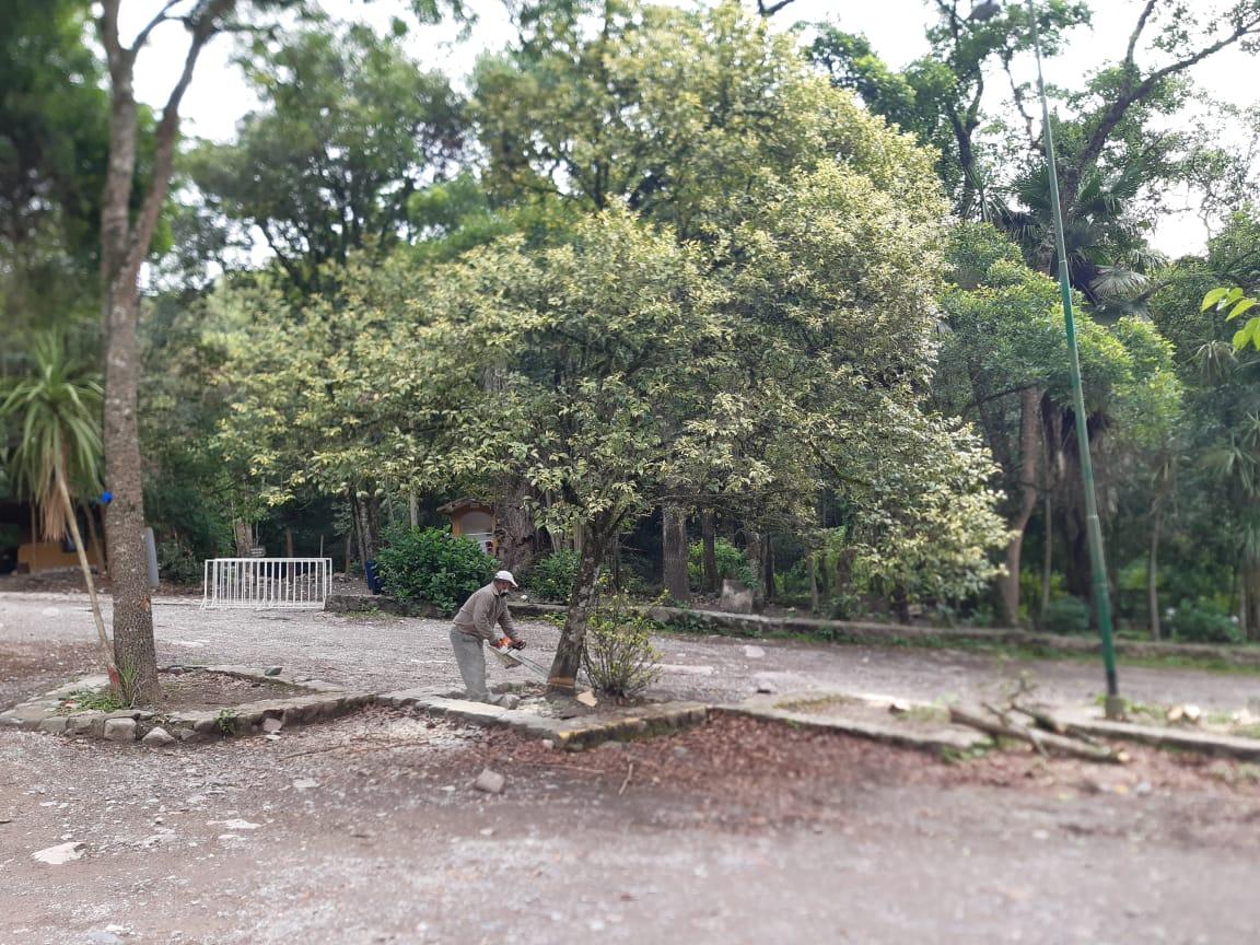 Inició la extracción de exóticas invasoras y reforestación con especies nativas en la Quebrada